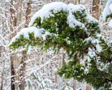 Погода в декабре в Казахстане
