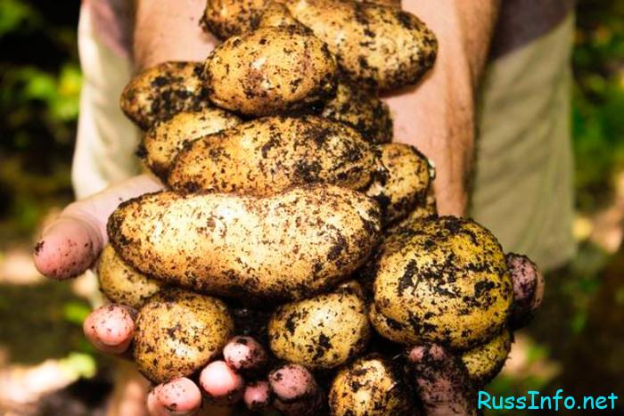 Посадка картофеля по лунному календарю на 2022 год