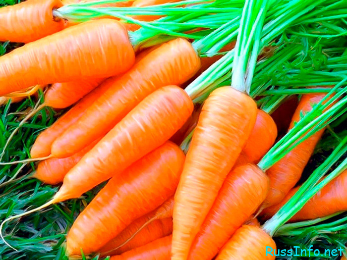 Календарь посадки моркови в июне 2022 года