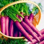 Календарь посадки моркови в апреле 2022 года