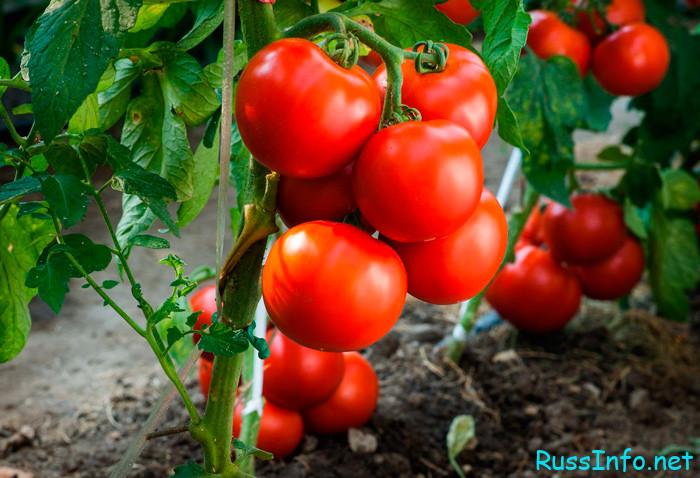 Посадка томатов по лунному календарю на февраль 2022 год
