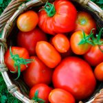 Посадка томатов по лунному календарю на май 2022 год